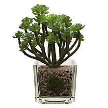 Buy House by John Lewis Artificial Mini Echeveria with Stalks, H15cm Online at johnlewis.com