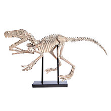 Buy Libra Decorative Dinosaur, Multi Online at johnlewis.com