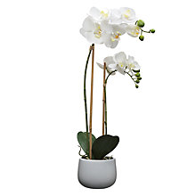 Buy House by John Lewis Artificial Orchid, White, Large Online at johnlewis.com