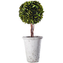 Buy Winterflora Topiary Tree, Green, Medium Online at johnlewis.com
