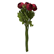 Buy John Lewis Ranunculus Flower Bunch, Mulberry Online at johnlewis.com