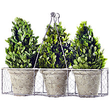 Buy Winterflora Tall Topiary Tree Pot Plants, Green Online at johnlewis.com