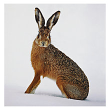 Buy Almanac Winter Hare Charity Christmas Cards, Box of 8 Online at johnlewis.com