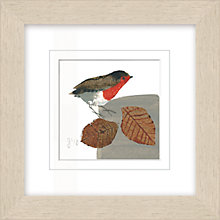 Buy Julia Burns - Red Hen Robin Framed Potato Print, 35 x 35cm Online at johnlewis.com