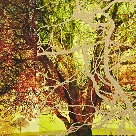 Buy Gallery One Trees of Solitude Picture Boxes, Set of 3, 35 x 35cm Online at johnlewis.com