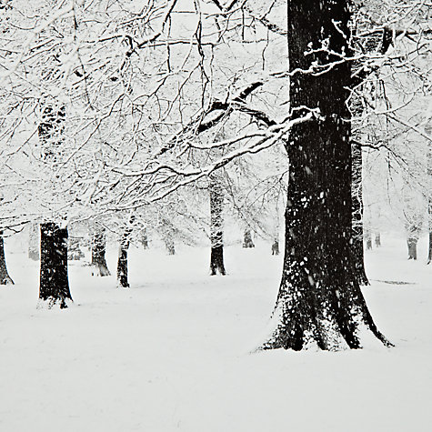 Buy Gallery One, Gregg Sedgwick -  Snow In Richmond Park Mounted Print, A2 (42 x 59.5cm) Online at johnlewis.com