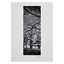 Buy Gallery One, Gregg Sedgwick - Tangled Branches Mounted Print, A3 (42 x 29.7cm) Online at johnlewis.com