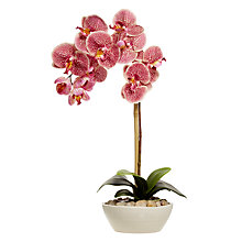 Buy John Lewis Phalenopsis Orchid And Coral Flowers, Multi Online at johnlewis.com