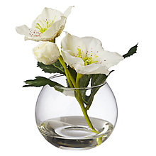 Buy Peony Hellebores In Glass Bubble Online at johnlewis.com