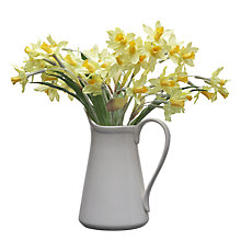 Buy John Lewis Daffodils In Jug, White Online at johnlewis.com