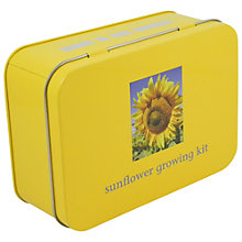Buy Apples To Pairs Sunflower Growing Tin Online at johnlewis.com