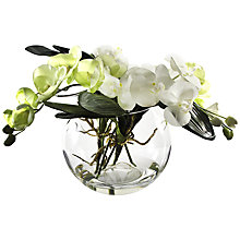 Buy Peony Phalaenopsis Orchid In Glass Bowl, White, Large Online at johnlewis.com