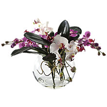 Buy Peony Phalaenopsis Orchid In Glass Bowl, Pink, Large Online at johnlewis.com