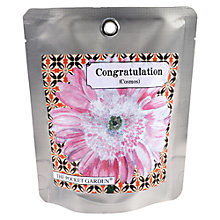 Buy The Pocket Garden Congratulations Cosmos Seeds Online at johnlewis.com