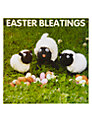 Mint Easter Bleatings Easter Card