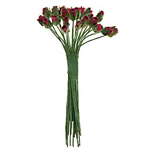 Buy John Lewis Minute Rose Buds, Pack of 24 Online at johnlewis.com