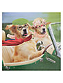 Card Mix Dogs In Convertible Greeting Card