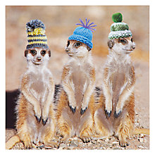 Buy Icon Meerkat in Hats Greeting Card Online at johnlewis.com