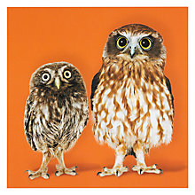 Buy Icon Twit-twoo Greeting Card Online at johnlewis.com