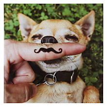 Buy Woodmansterne Chihuahua Greeting Card Online at johnlewis.com