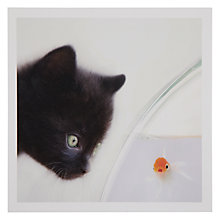 Buy Woodmansterne Black Kitten Greeting Card Online at johnlewis.com