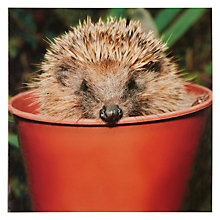 Buy Woodmansterne Hedgehog Greeting Card Online at johnlewis.com