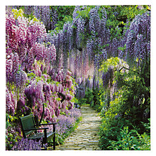 Buy Woodmansterne Wisteria Walk Greeting Card Online at johnlewis.com