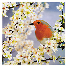 Buy Woodmansterne Slim Robin Greeting Card Online at johnlewis.com