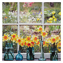 Buy Woodmansterne Daffodils on Window Sill Greeting Card Online at johnlewis.com