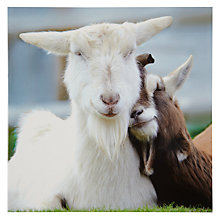 Buy Woodmansterne Two Goats Cuddling Greeting Card Online at johnlewis.com
