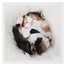 Buy Woodmansterne Kitten Sleeping Greeting Card Online at johnlewis.com