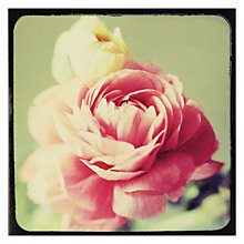 Buy Hotch Potch Pink Rose Greeting Card Online at johnlewis.com