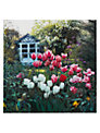 Paperhouse In The Garden Greeting Card