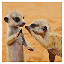 Buy Woodmansterne Two Meercats Greeting Card Online at johnlewis.com