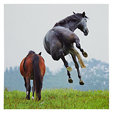 Buy Woodmansterne Horses Greeting Card Online at johnlewis.com