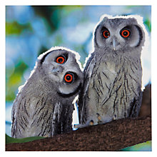 Buy Woodmansterne Two Owlets Greeting Card Online at johnlewis.com