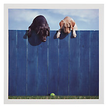 Buy Woodmansterne Labradors Fence Greeting Card Online at johnlewis.com