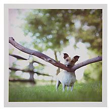 Buy Woodmansterne Jack Russell Greeting Card Online at johnlewis.com