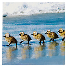 Buy Woodmansterne Ducklings Marching Greeting Card Online at johnlewis.com