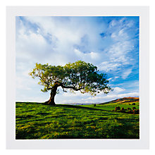 Buy PJF Photography Broken Tree Greeting Card Online at johnlewis.com