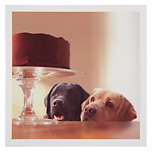 Buy Woodmansterne Labradors Greeting Card Online at johnlewis.com