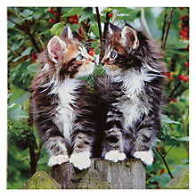 Buy Woodmansterne Two Kittens Greeting Card Online at johnlewis.com