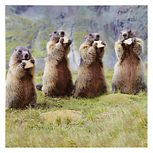 Buy Woodmansterne Four Marmots Greeting Card Online at johnlewis.com