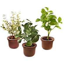 Buy Peony Set of Three Herb Pots, Brown Online at johnlewis.com
