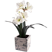 Buy Peony Decorative Potted Amaryllis, White Online at johnlewis.com