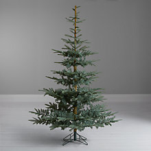 Buy John Lewis Argyle Blue Fir Christmas Tree, 7ft Online at johnlewis.com