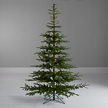Buy John Lewis Argyle Green Fir Christmas Tree, 8ft Online at johnlewis.com