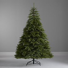 Buy John Lewis Kinross Spruce Christmas Tree, 7ft Online at johnlewis.com
