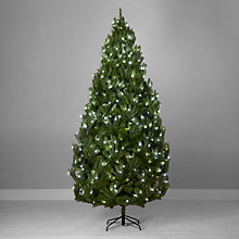 Buy John Lewis Pre-Lit Peardrop Christmas Tree, 9ft Online at johnlewis.com