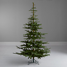 Buy John Lewis Argyle Christmas Tree, Green Fir, 7ft Online at johnlewis.com